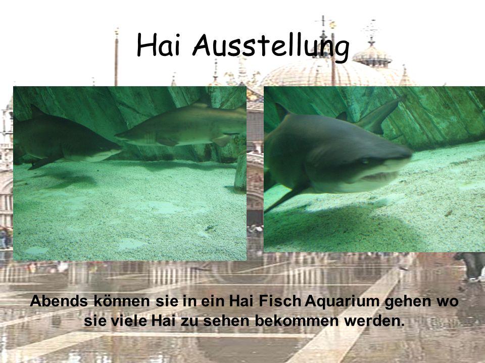 Hai Ausstellung Abends können sie in ein Hai Fisch Aquarium gehen wo sie viele Hai zu sehen bekommen werden.