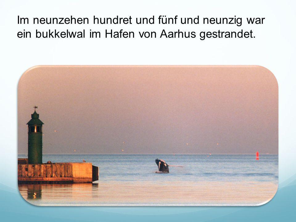 Im neunzehen hundret und fünf und neunzig war ein bukkelwal im Hafen von Aarhus gestrandet.