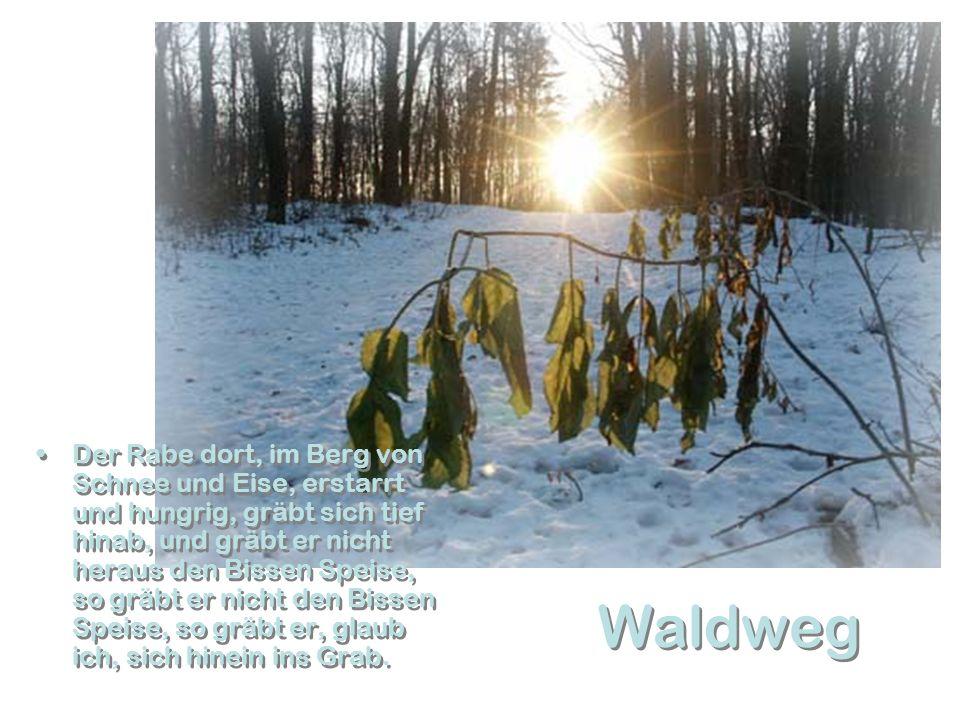 Laab im Walde Heimat und Geburtsort des Fotografen