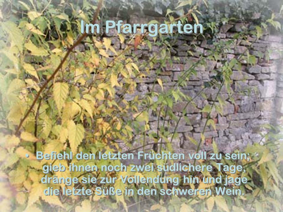 Vom Roppersberg Wer jetzt kein Haus hat, baut sich keines mehr.