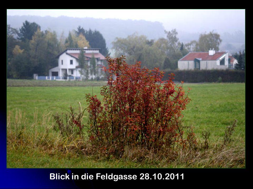 Blick in die Feldgasse 28.10.2011