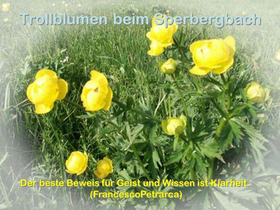 Trollblumen beim Sperbergbach Der beste Beweis für Geist und Wissen ist Klarheit. (FrancescoPetrarca) Der beste Beweis für Geist und Wissen ist Klarhe
