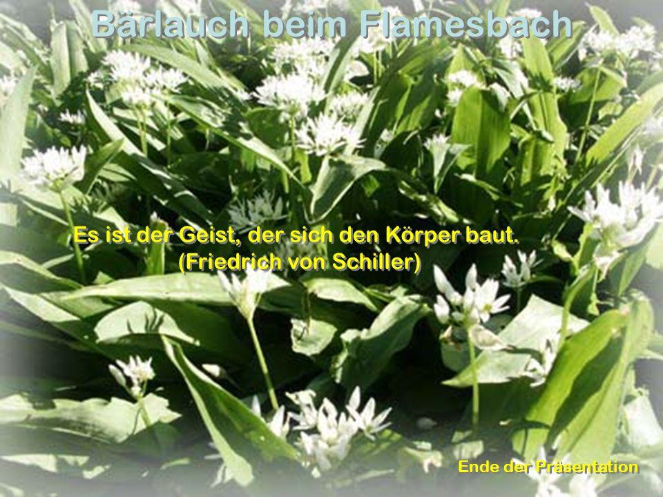 Bärlauch beim Flamesbach Es ist der Geist, der sich den Körper baut. (Friedrich von Schiller) Es ist der Geist, der sich den Körper baut. (Friedrich v