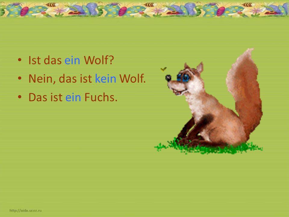 Ist das ein Wolf? Nein, das ist kein Wolf. Das ist ein Fuchs.