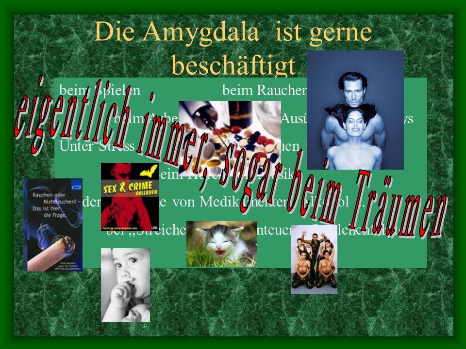 Die Amygdala ist gerne beschäftigt beim Spielen beim Rauchen beim Arbeiten beim Ausüben von Hobbys Unter Stress beim Anschauen von Filmen beim Hören von Musik bei der Einnahme von Medikamenten, Alkohol...