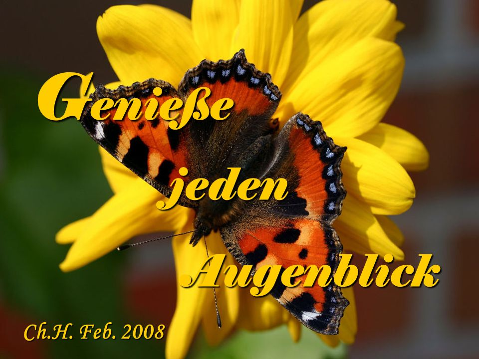 Genieße jeden Augenblick Ch.H. Feb. 2008