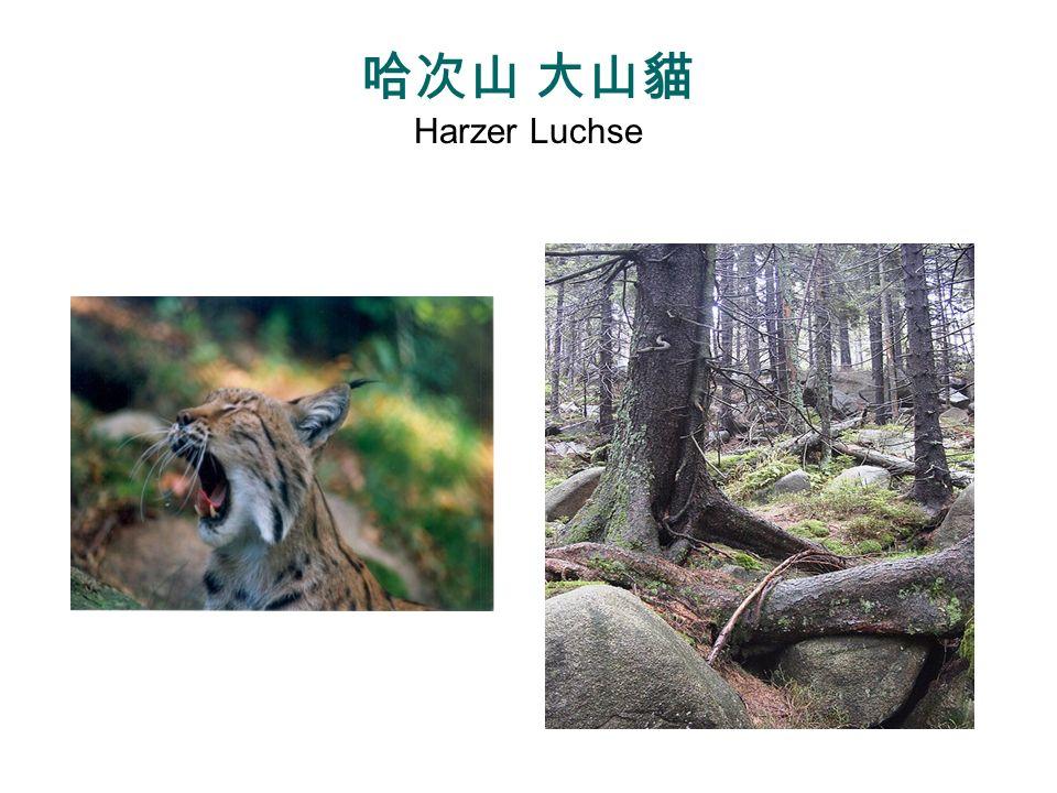 http://zwiener.org/pics/gallery/Luchse/Luchs-Baum.jpg http://www.havaneser.de/new/fwurf_6.html