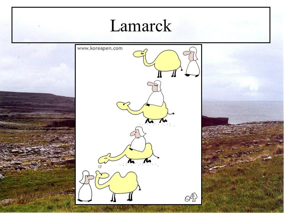 Lamarck (1744 – 1829) Niedere Formen entstehen beständig aus Urzeugung Perfektion durch eigenes Streben nach Notwendigkeit Durch Anpassung an Umwelt Veränderung