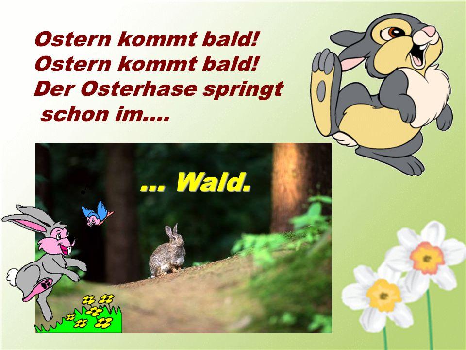Ostern kommt bald! Der Osterhase springt schon im…. … Wald.