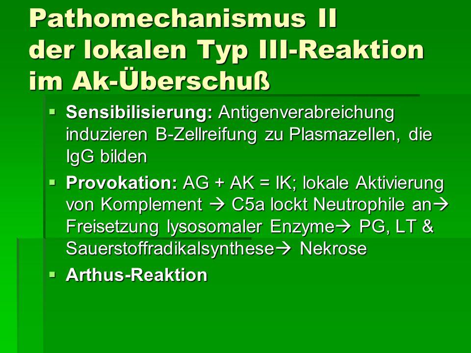 Pathomechanismus II der lokalen Typ III-Reaktion im Ak-Überschuß Sensibilisierung: Antigenverabreichung induzieren B-Zellreifung zu Plasmazellen, die IgG bilden Sensibilisierung: Antigenverabreichung induzieren B-Zellreifung zu Plasmazellen, die IgG bilden Provokation: AG + AK = IK; lokale Aktivierung von Komplement C5a lockt Neutrophile an Freisetzung lysosomaler Enzyme PG, LT & Sauerstoffradikalsynthese Nekrose Provokation: AG + AK = IK; lokale Aktivierung von Komplement C5a lockt Neutrophile an Freisetzung lysosomaler Enzyme PG, LT & Sauerstoffradikalsynthese Nekrose Arthus-Reaktion Arthus-Reaktion