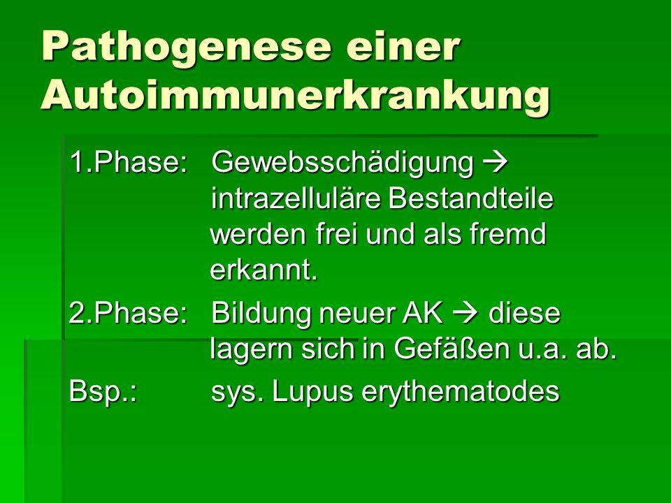 Pathogenese einer Autoimmunerkrankung 1.Phase: Gewebsschädigung intrazelluläre Bestandteile werden frei und als fremd erkannt.