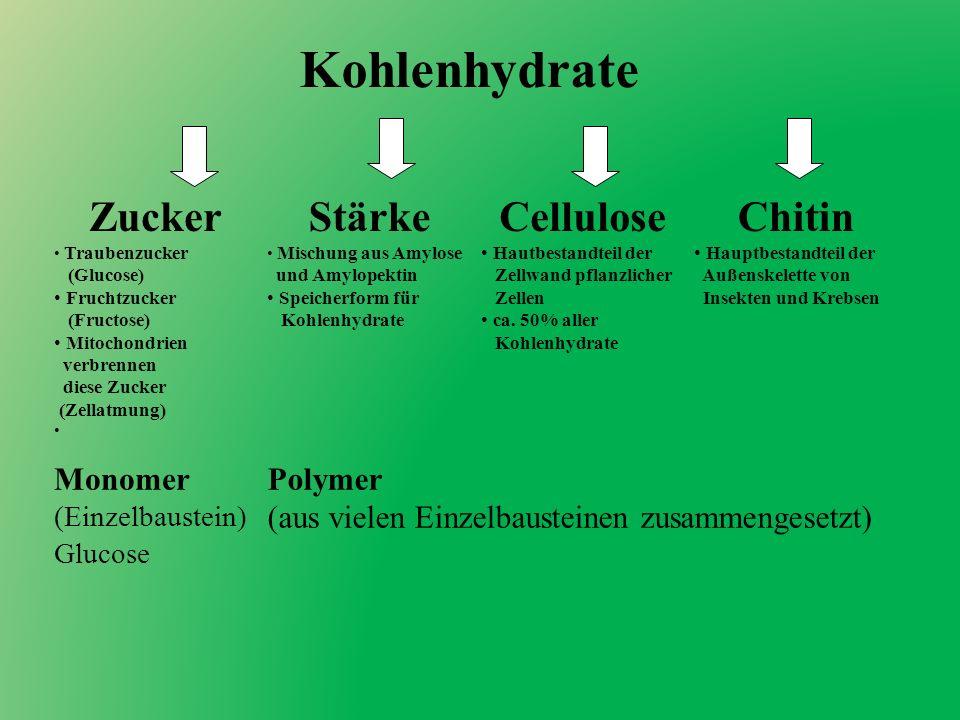 Kohlenhydrate ZuckerStärkeCelluloseChitin Traubenzucker (Glucose) Fruchtzucker (Fructose) Mitochondrien verbrennen diese Zucker (Zellatmung) Mischung