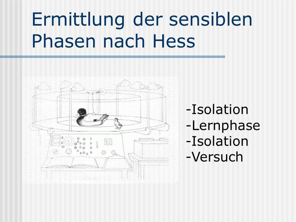 Ermittlung der sensiblen Phasen nach Hess -Isolation -Lernphase -Isolation -Versuch
