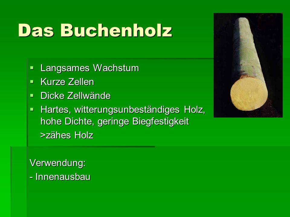 Das Buchenholz Langsames Wachstum Langsames Wachstum Kurze Zellen Kurze Zellen Dicke Zellwände Dicke Zellwände Hartes, witterungsunbeständiges Holz, h