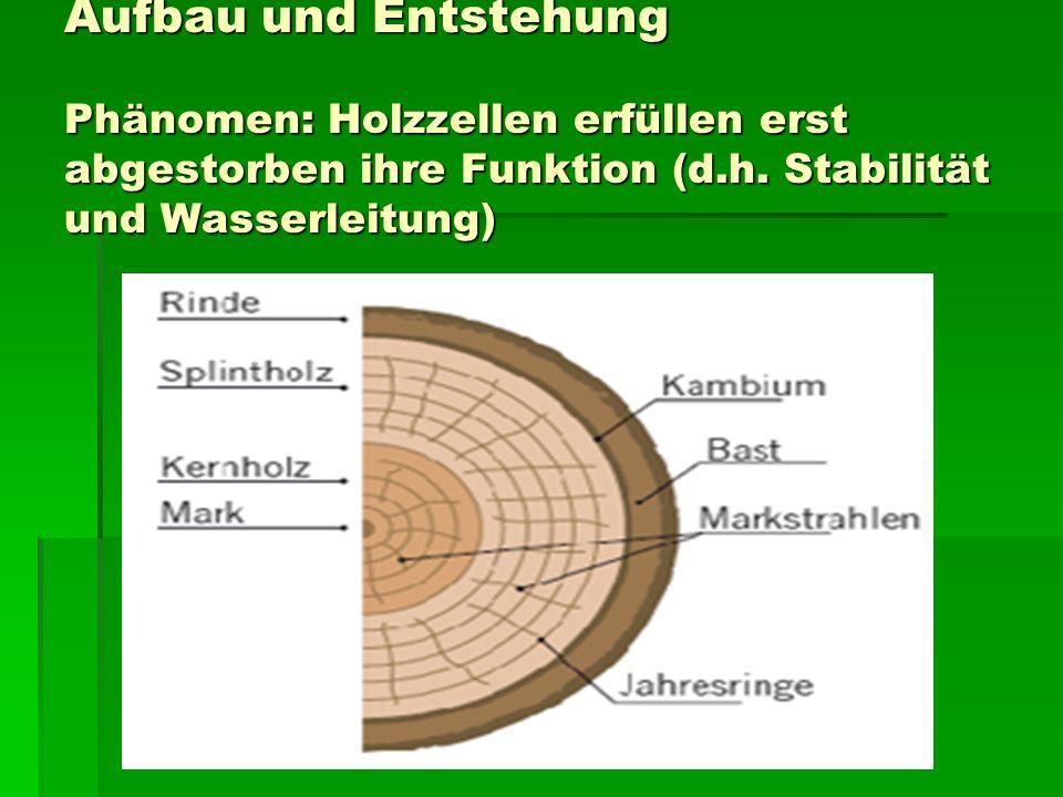 Aufbau und Entstehung Phänomen: Holzzellen erfüllen erst abgestorben ihre Funktion (d.h. Stabilität und Wasserleitung)