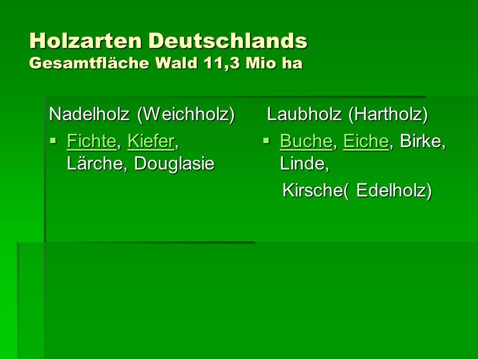 Holzarten Deutschlands Gesamtfläche Wald 11,3 Mio ha Nadelholz (Weichholz) Fichte, Kiefer, Lärche, Douglasie Fichte, Kiefer, Lärche, Douglasie FichteK
