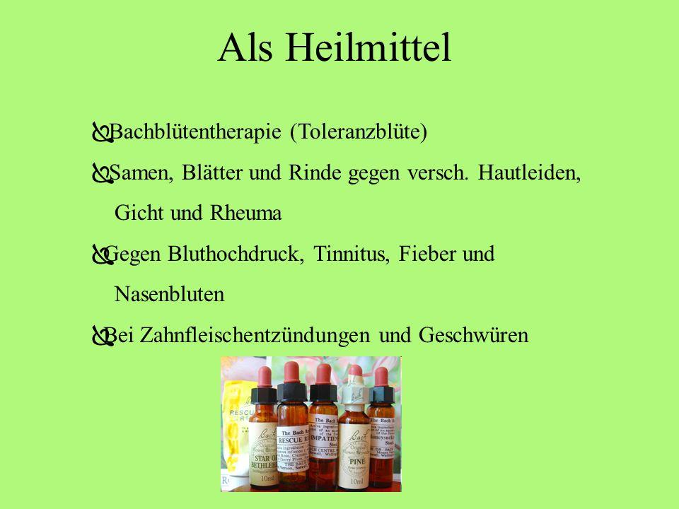 Nutzung Nahrungsmittel (Bucheckernöl) Viehfutter (Laub) Brennholz Möbelherstellung Instrumentherstellung (Klavier/Orgel) Glasproduktion (grünes Waldgl