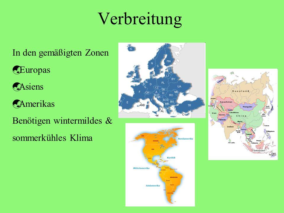 Verbreitung In den gemäßigten Zonen Europas Asiens Amerikas Benötigen wintermildes & sommerkühles Klima