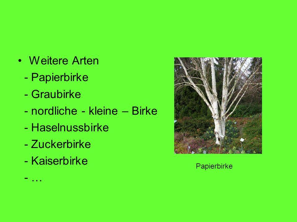 Weitere Arten - Papierbirke - Graubirke - nordliche - kleine – Birke - Haselnussbirke - Zuckerbirke - Kaiserbirke - … Papierbirke