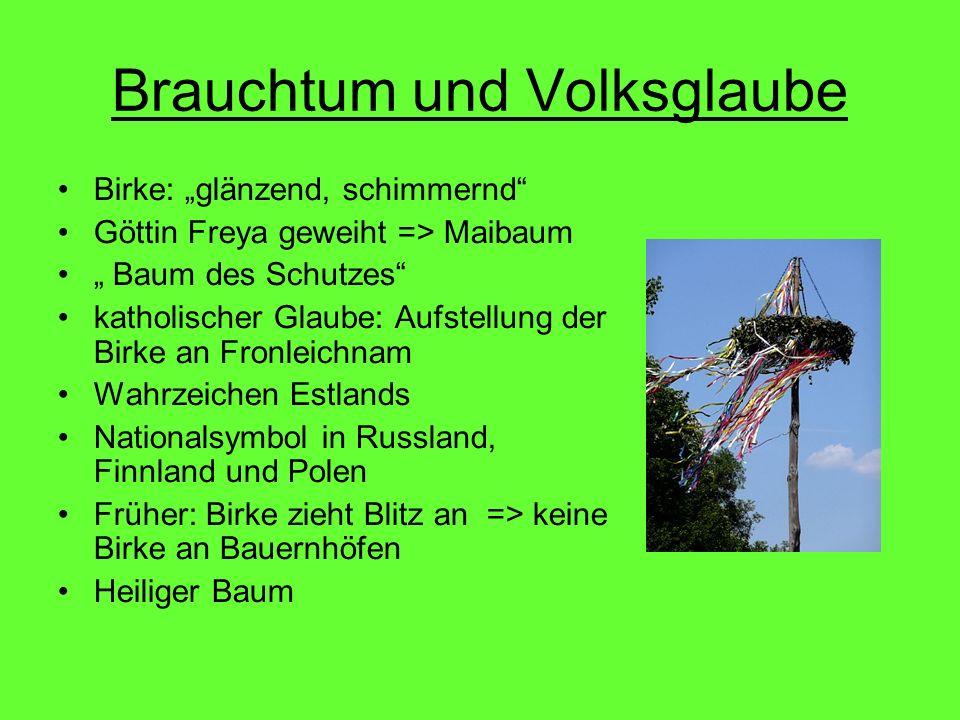 Brauchtum und Volksglaube Birke: glänzend, schimmernd Göttin Freya geweiht => Maibaum Baum des Schutzes katholischer Glaube: Aufstellung der Birke an