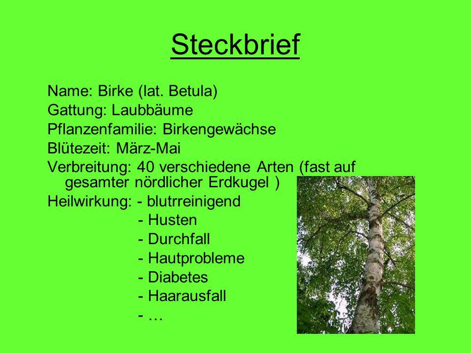 Steckbrief Name: Birke (lat. Betula) Gattung: Laubbäume Pflanzenfamilie: Birkengewächse Blütezeit: März-Mai Verbreitung: 40 verschiedene Arten (fast a