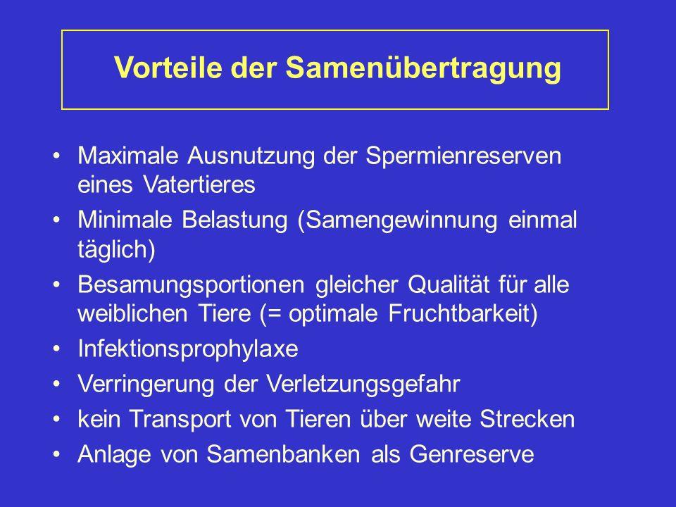 Vorteile der Samenübertragung Maximale Ausnutzung der Spermienreserven eines Vatertieres Minimale Belastung (Samengewinnung einmal täglich) Besamungsp