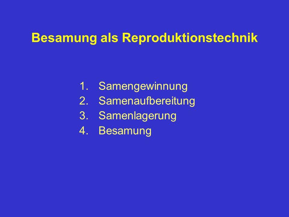 Besamung als Reproduktionstechnik 1.Samengewinnung 2.Samenaufbereitung 3.Samenlagerung 4.Besamung