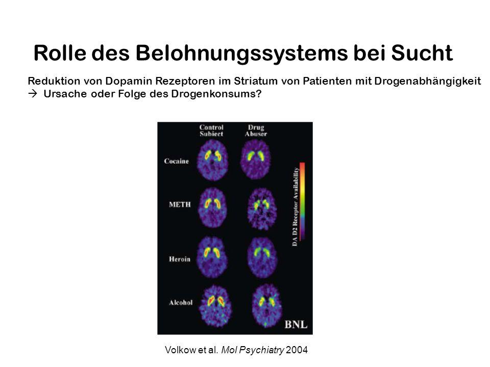 Rolle des Belohnungssystems bei Sucht Reduktion von Dopamin Rezeptoren im Striatum von Patienten mit Drogenabhängigkeit Ursache oder Folge des Drogenk