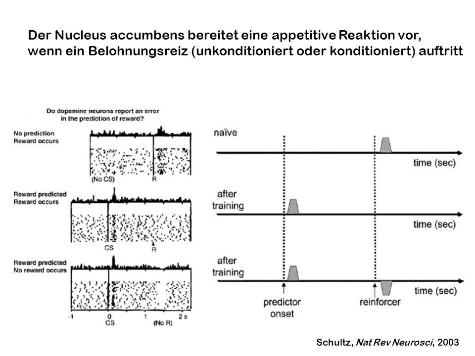 Der Nucleus accumbens bereitet eine appetitive Reaktion vor, wenn ein Belohnungsreiz (unkonditioniert oder konditioniert) auftritt Schultz, Nat Rev Ne