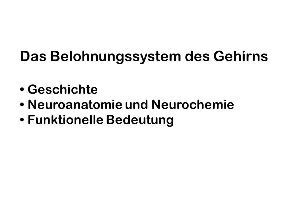 Das Belohnungssystem ist ein stammesgeschichtlich altes Netzwerk aus definierten neuronalen Strukturen und Neurotransmittern (v.a.