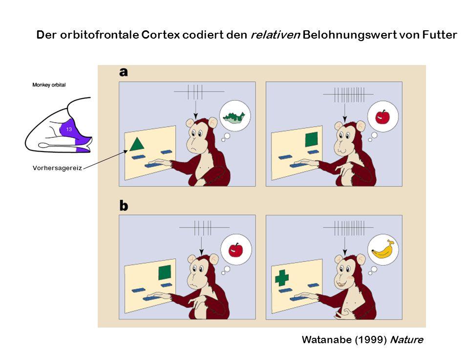Watanabe (1999) Nature Der orbitofrontale Cortex codiert den relativen Belohnungswert von Futter Vorhersagereiz