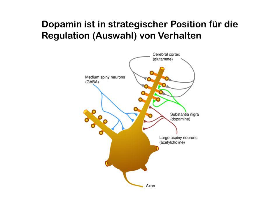 Rolle des Belohnungssystems bei Sucht Reduktion von Dopamin Rezeptoren im Striatum von Patienten mit Drogenabhängigkeit Ursache oder Folge des Drogenkonsums.
