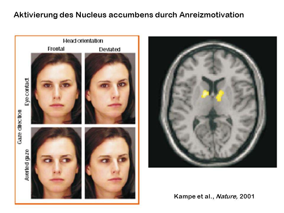 Aktivierung des Nucleus accumbens durch Anreizmotivation Kampe et al., Nature, 2001