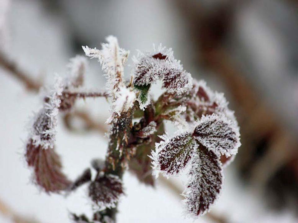 Der winter ist gekommen, Hats blümlein mitgenommen, Wohl in der letzten nacht, Doch hab ich ihm verziehen, Denn an den scheiben blühen Eisblumen wie sterne, Welch eine Pracht Manfred schröder