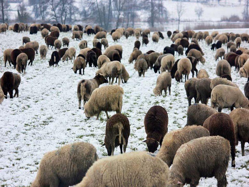 Flocken, weisser schnee Den ich herunter fallen seh.