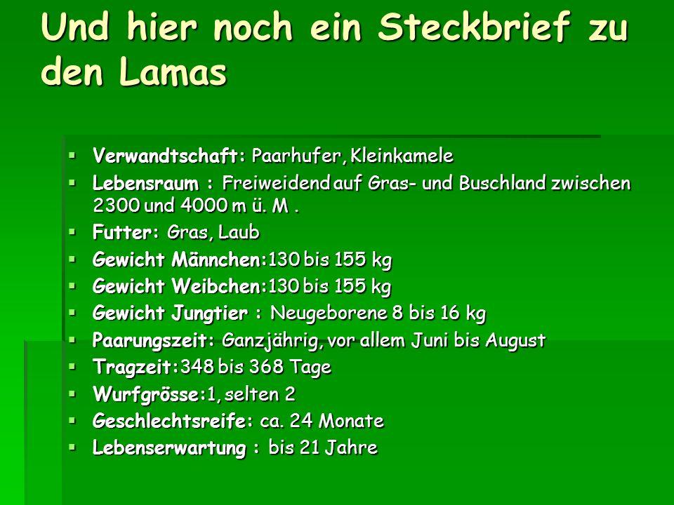 Und hier noch ein Steckbrief zu den Lamas Verwandtschaft: Paarhufer, Kleinkamele Verwandtschaft: Paarhufer, Kleinkamele Lebensraum : Freiweidend auf Gras- und Buschland zwischen 2300 und 4000 m ü.
