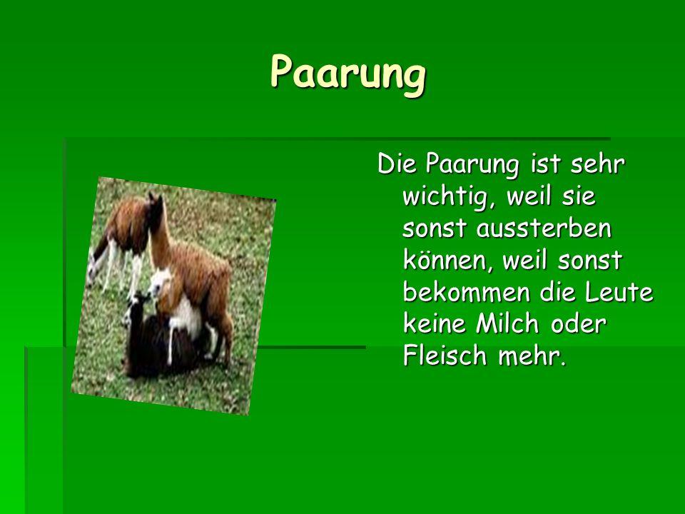 Paarung Die Paarung ist sehr wichtig, weil sie sonst aussterben können, weil sonst bekommen die Leute keine Milch oder Fleisch mehr.