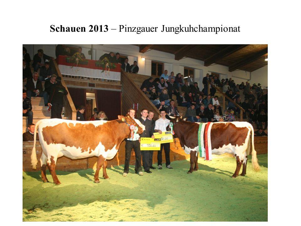 Schauen 2013 – Pinzgauer Jungkuhchampionat