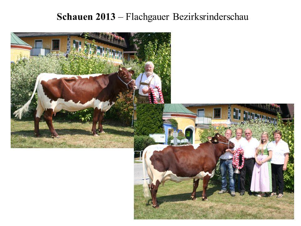 Schauen 2013 – Flachgauer Bezirksrinderschau