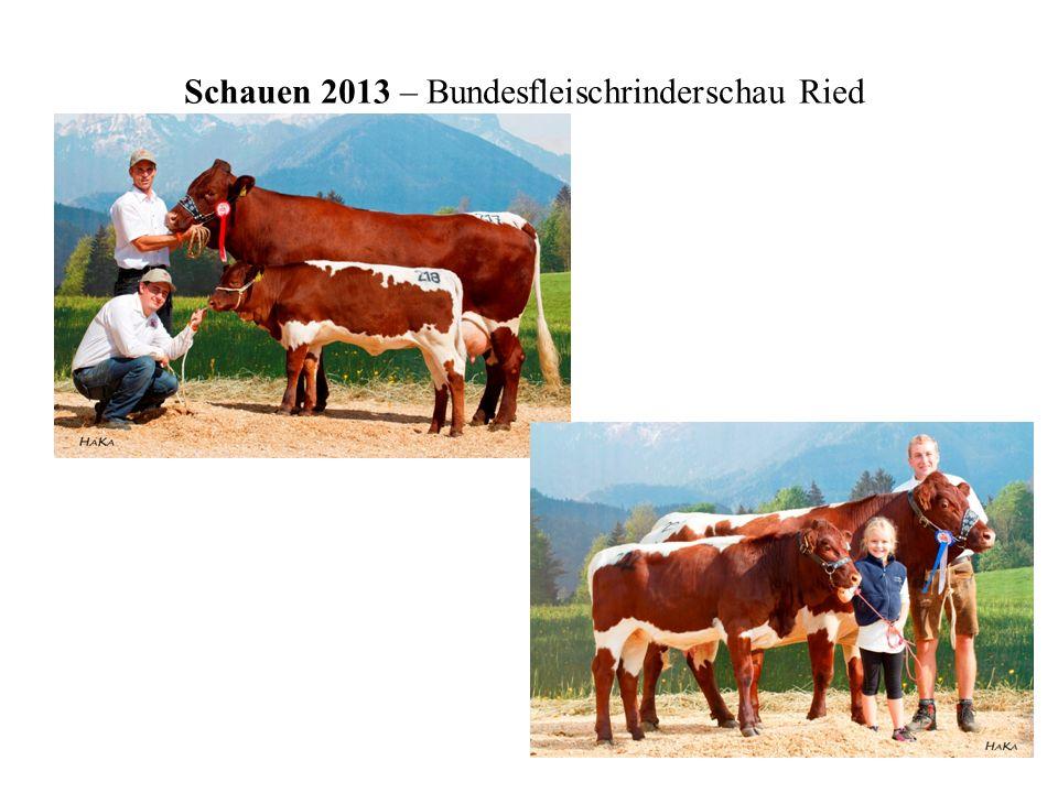 Schauen 2013 – Bundesfleischrinderschau Ried