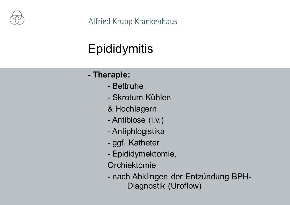 - Therapie: - Bettruhe - Skrotum Kühlen & Hochlagern - Antibiose (i.v.) - Antiphlogistika - ggf. Katheter - Epididymektomie, Orchiektomie - nach Abkli