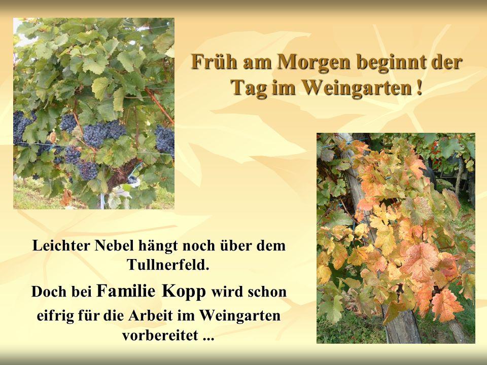 Früh am Morgen beginnt der Tag im Weingarten ! Leichter Nebel hängt noch über dem Tullnerfeld. Doch bei Familie Kopp wird schon eifrig für die Arbeit
