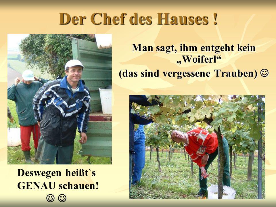 Der Chef des Hauses ! Man sagt, ihm entgeht kein Woiferl (das sind vergessene Trauben) (das sind vergessene Trauben) Deswegen heißt`s GENAU schauen!