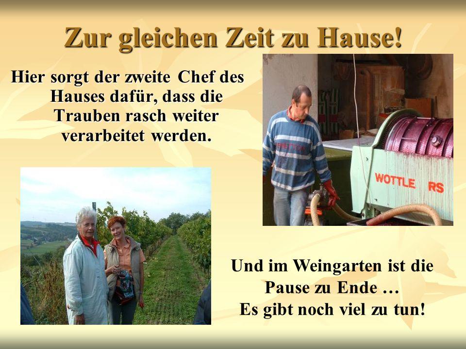 Zur gleichen Zeit zu Hause! Hier sorgt der zweite Chef des Hauses dafür, dass die Trauben rasch weiter verarbeitet werden. Und im Weingarten ist die P