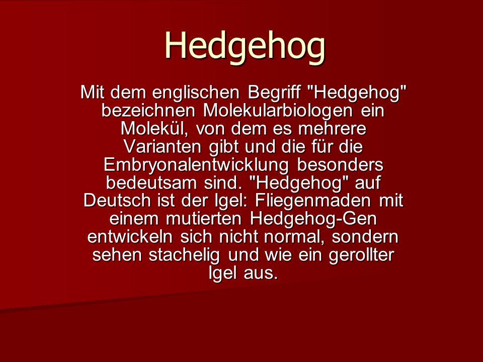 Die Variante sonic hedgehog , benannt nach einem Sega-Computerspiel, ist offenbar für die Hautentwicklung wichtig.