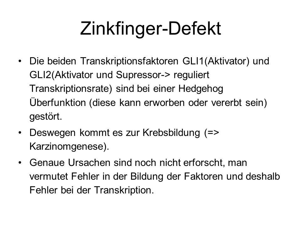 Zinkfinger-Defekt Die beiden Transkriptionsfaktoren GLI1(Aktivator) und GLI2(Aktivator und Supressor-> reguliert Transkriptionsrate) sind bei einer He