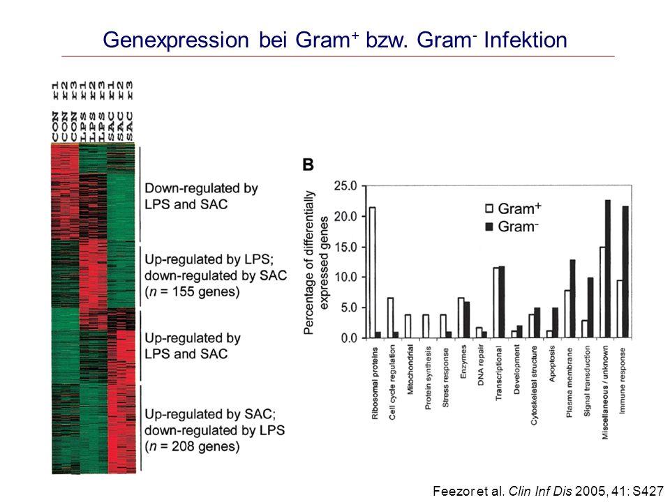 Zytokin-Dynamik bei Endotoxämie 4ng/kg LPS i.v.