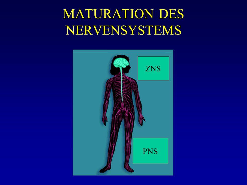 MATURATION DES NERVENSYSTEMS ZNS PNS