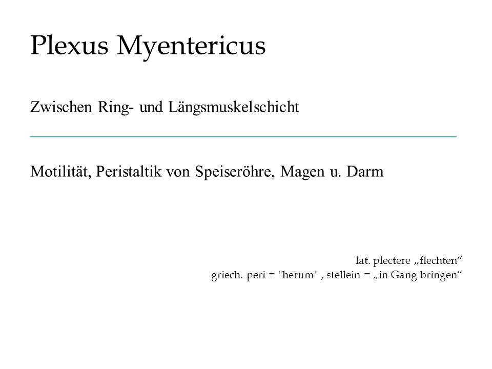 Plexus Myentericus Zwischen Ring- und Längsmuskelschicht ____________________________________________________ Motilität, Peristaltik von Speiseröhre,