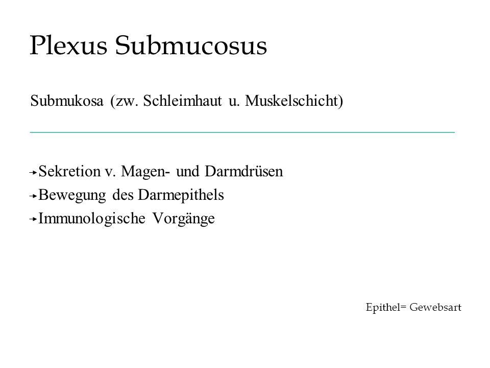 Plexus Submucosus Submukosa (zw. Schleimhaut u. Muskelschicht) ____________________________________________________ Sekretion v. Magen- und Darmdrüsen